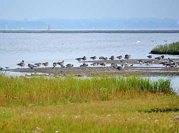 Naturschutzgebiet Fauler See